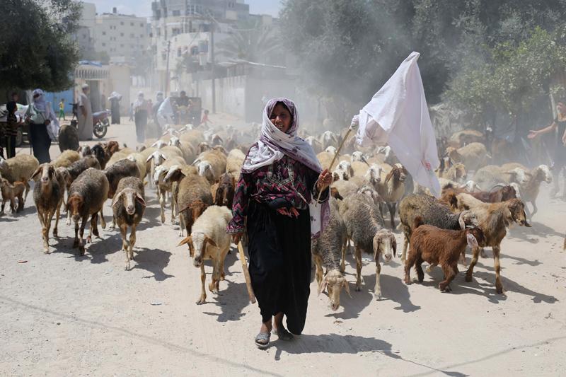 rafah-striscia-di-gaza-19-luglio-2014